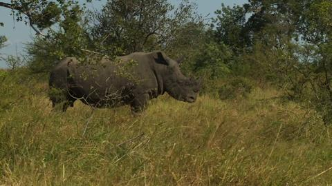 PBS NewsHour -- Can cross-border cooperation save the endangered rhino?
