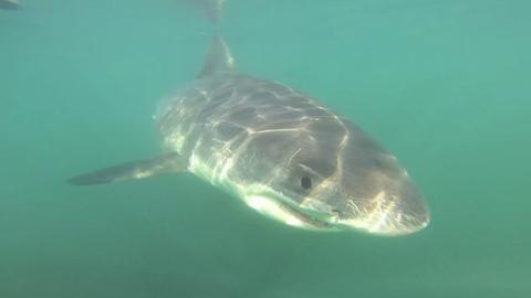 PBS NewsHour -- Swordfishing practices under scrutiny on California's coast