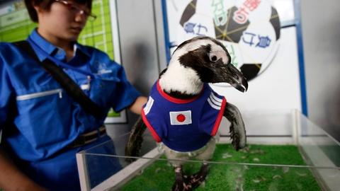PBS NewsHour -- Animals predict World Cup outcomes across the globe