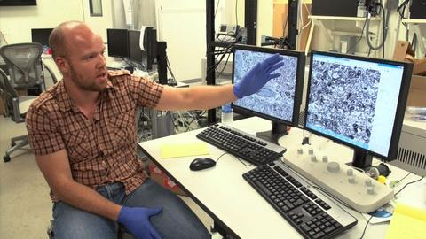 PBS NewsHour -- Mapping the circuitry of a fish's brain