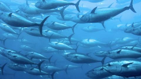 PBS NewsHour -- Pacific island nation of Kiribati bans commercial fishing