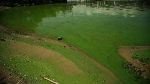 PBS NewsHour -- Saving the Great Lakes from toxic algae