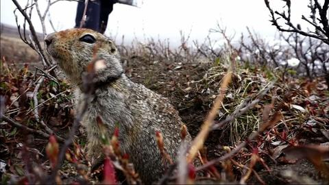 PBS NewsHour -- How soil and squirrels offer cues on Alaska climate change