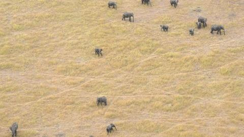 PBS NewsHour -- Project aims to count Africa's shrinking elephant population