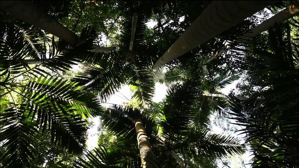 How poet W.S. Merwin found paradise by planting palm trees image
