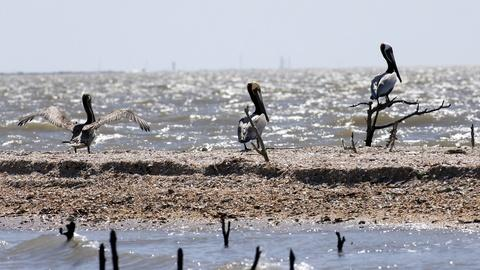 PBS NewsHour -- Five years on, what do we know about BP oil spill damage?