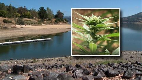 PBS NewsHour -- Are marijuana growers sucking California dry?
