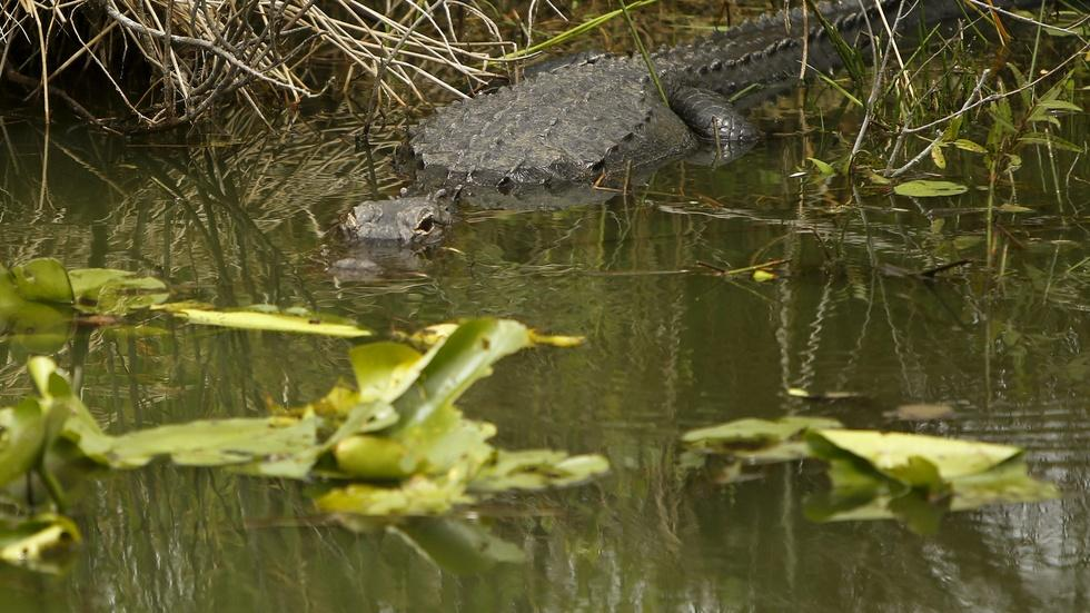 Rising sea levels threaten Florida's Everglades image