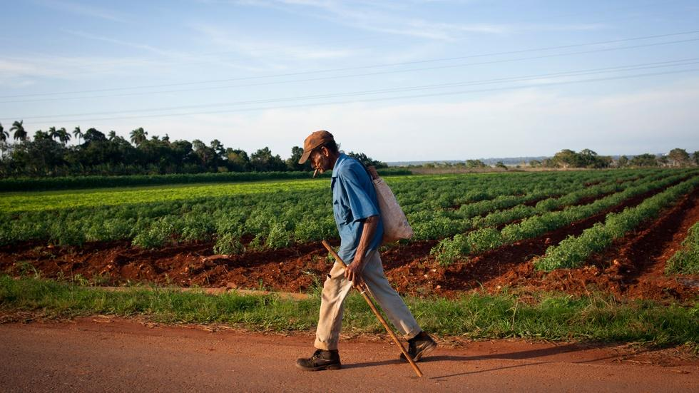What Cuba can teach America about farming image