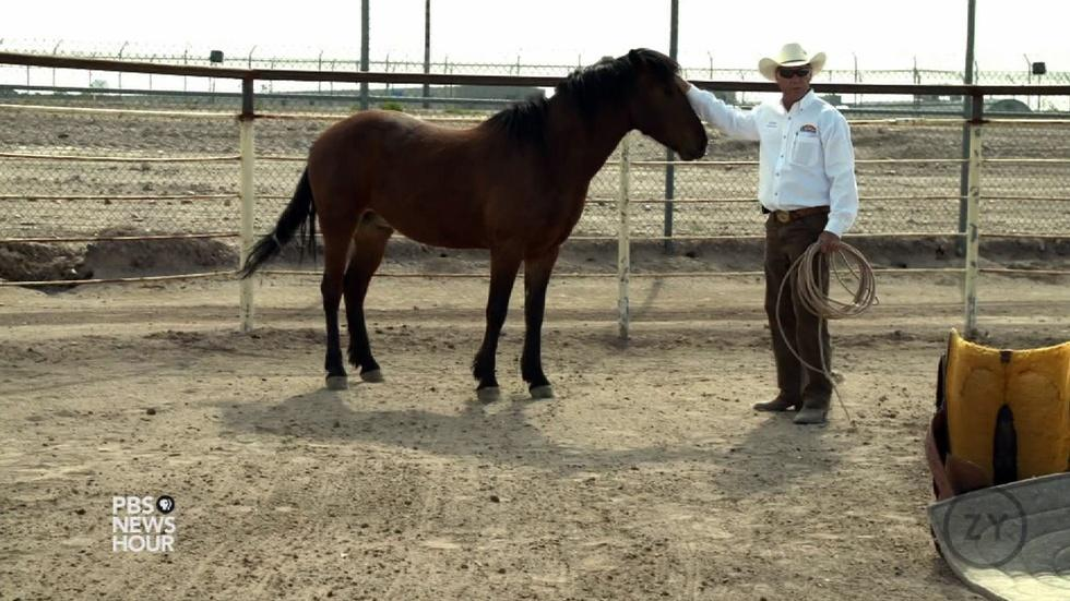 Not Trending: Can horses help rehabilitate inmates? image