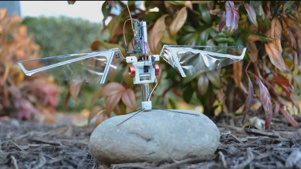 How studying insects may lead to smarter drones image