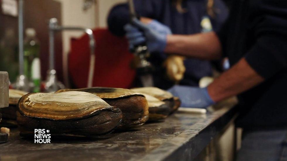 Cracking down on the shellfish black market image