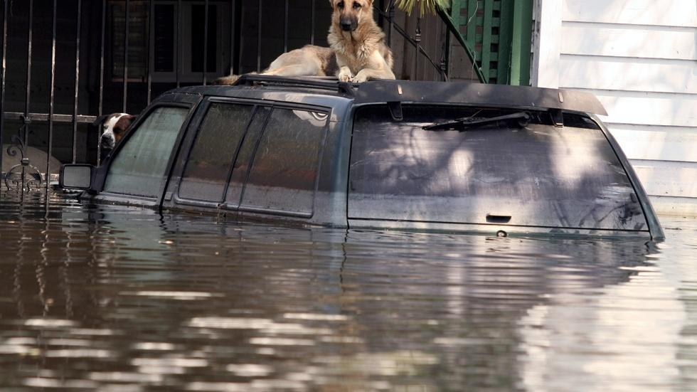 How Katrina changed the laws about evacuating pets image