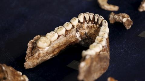PBS NewsHour -- Long-lost human ancestor is greatest find in decades