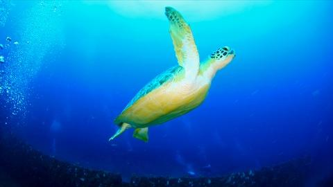 PBS NewsHour -- Shifts in Climate Shifting Sea Turtles