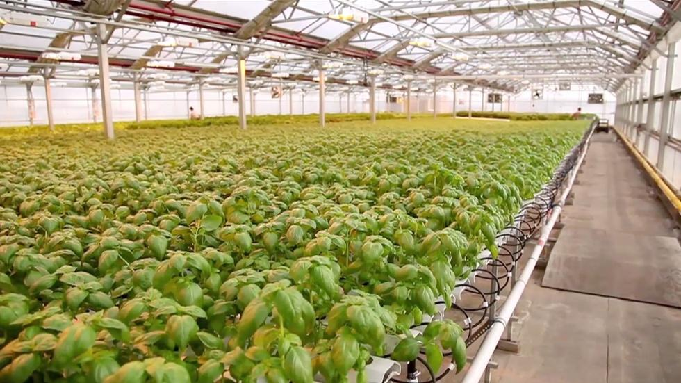 Why growing lettuce in New York City is a growing business image