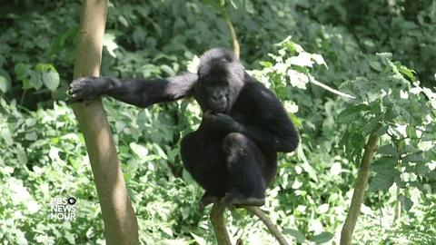 PBS NewsHour -- Protecting Virunga Park and seeing Congo's rich potential