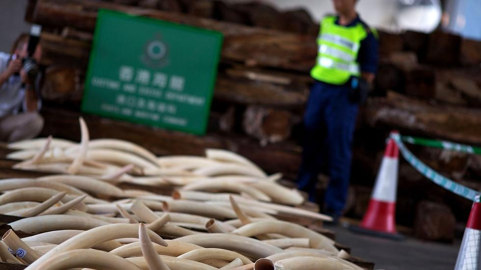 Hong Kong's illegal ivory trade still alive, despite pledge image