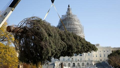 PBS NewsHour -- From Alaska to DC, the journey of the Capitol Christmas tree