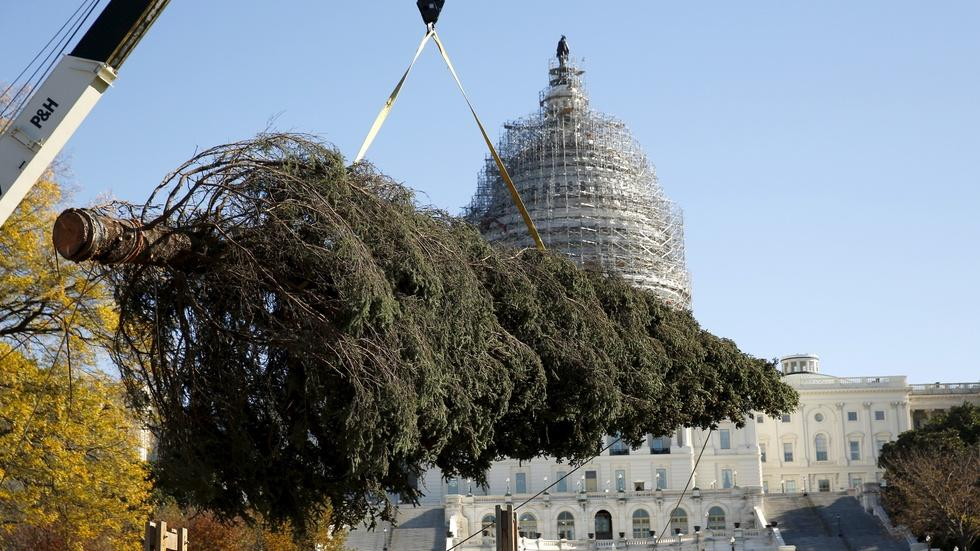 From Alaska to DC, the journey of the Capitol Christmas tree image