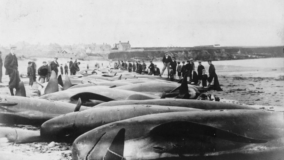 Remains of 144-year-old whaling shipwreck found near Alaska image