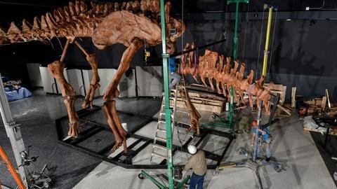 PBS NewsHour -- How the titanosaur discovery exhibits modern paleontology
