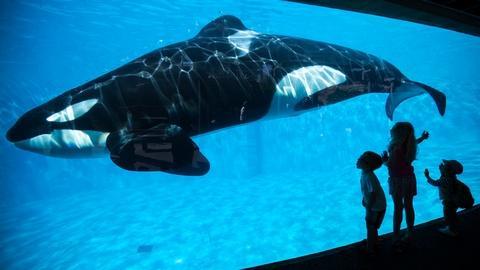 PBS NewsHour -- No more Shamu--SeaWorld to end breeding of orcas