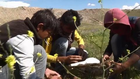 PBS NewsHour -- Yazidis of Iraq turn to truffles for survival