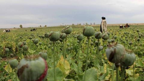 PBS NewsHour -- The Taliban resurge in Afghanistan — and ISIS also moves in