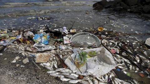 PBS NewsHour -- In Brazil's OIympic Bay, death and ecological devastation