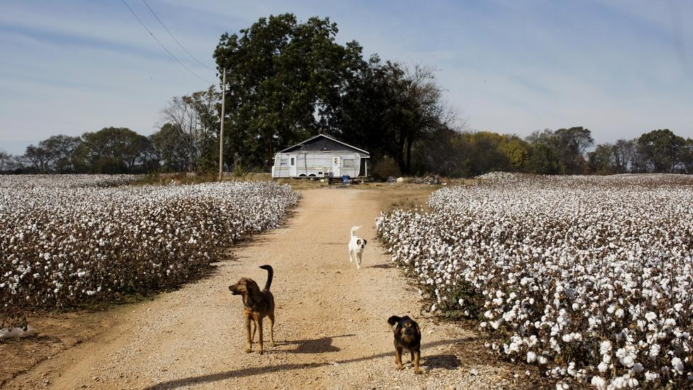 Poverty-stricken past and present in the Mississippi Delta image