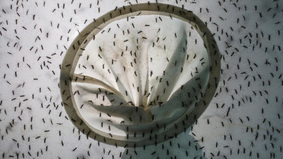 What Miami-Dade County is doing about Zika image