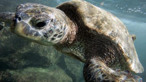 PBS NewsHour -- Obama to make marine preserve largest in the world