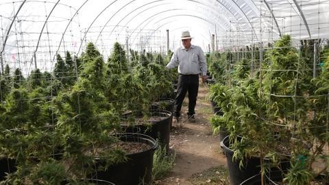 PBS NewsHour -- California will vote on legalizing recreational marijuana