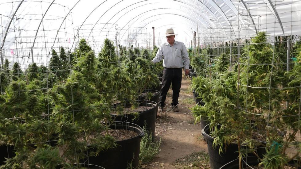 California will vote on legalizing recreational marijuana image