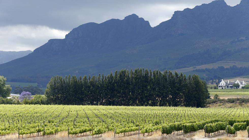 Cape Town's urban vineyard could revitalize the city's poor image