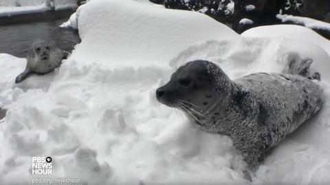 PBS NewsHour -- What happens when the zoo has a snow day