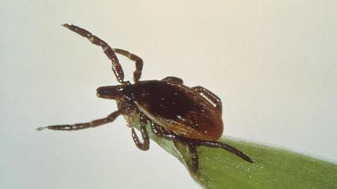 PBS NewsHour -- Why finding a solution to control Lyme disease isn't simple