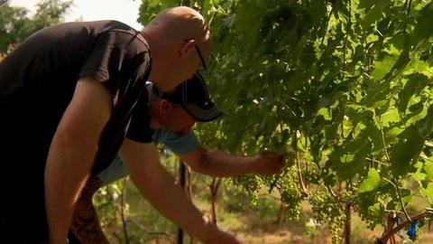 PBS NewsHour -- Training Students for Jobs in Washington's Wine Industry