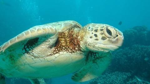 PBS NewsHour -- Oceans Face Mass Extinction