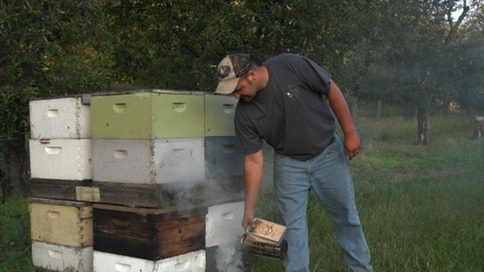 Beekeepers Feel the Sting of Climate Change image