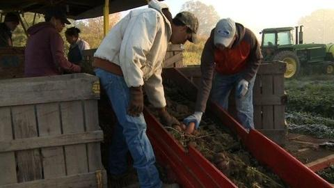 PBS NewsHour -- Farmers, Workers Cope With Impact of Ala. Immigration Law