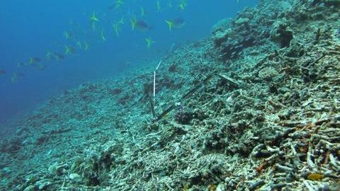 PBS NewsHour -- Storms, Starfish Wiped out Half of Great Barrier Reef Coral