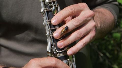 PBS NewsHour -- David Rothenberg Jams with the Cicadas