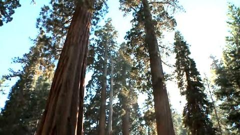 PBS NewsHour -- Crews Work to Save Yosemite Sequoias from Rim Fire