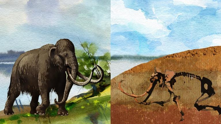 NOVA Labs: Fossils: Rocking the Earth