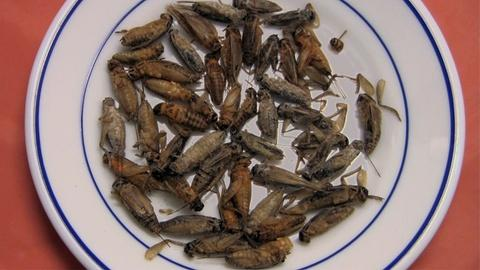 NOVA scienceNOW -- Five Reasons to Eat Insects