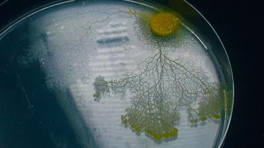 Slime Mold Smarts