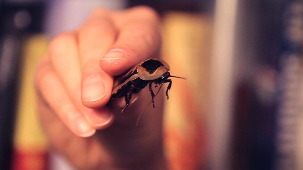 Cyborg Cockroaches image