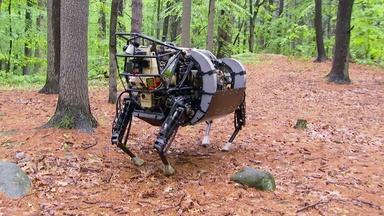 Animal Robot 1